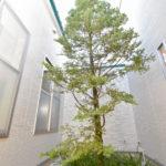中庭シンボルツリー
